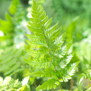 Buy garden plants online for the garden from gardening express choose from a vast selection of - Hardy office plants ...