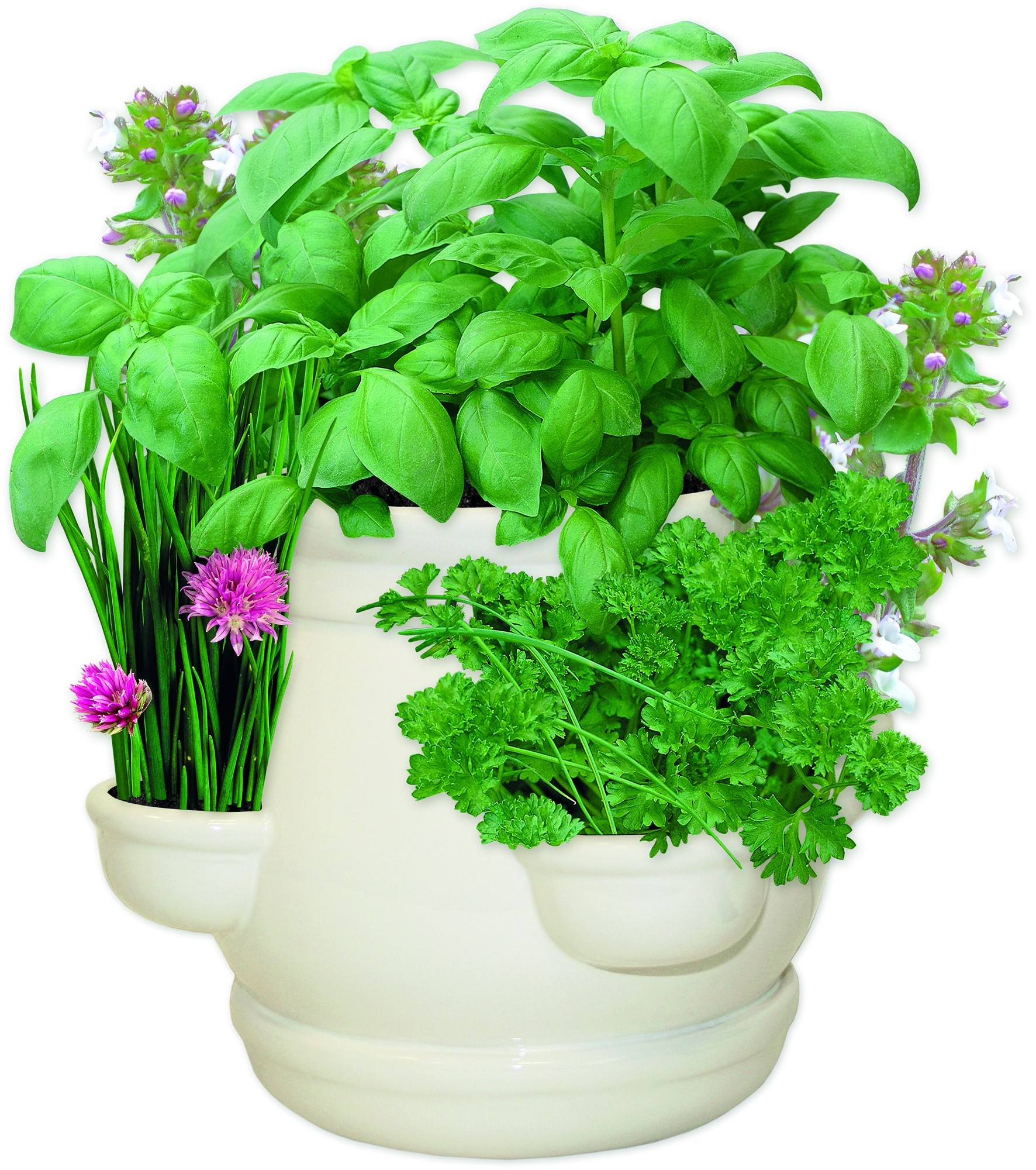 Kitchen Herbs: Grow Your Own Kitchen Garden Herbs Ceramic Planter Gift Set