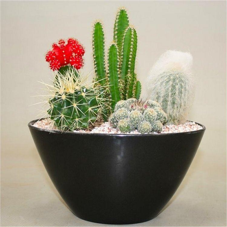 Cacti contemporary cactus garden arrangement perfect for Garden arrangement of plants