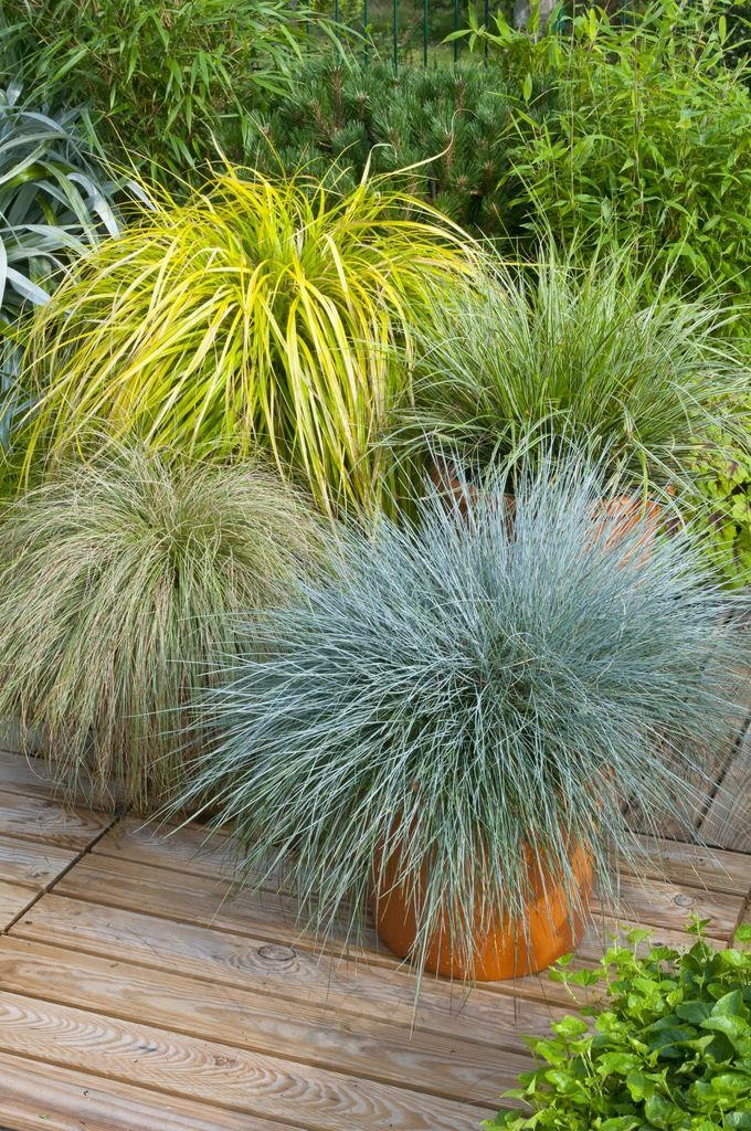 Ornamental Grasses Gorgeous grass pack of 10 amazing ornamental grasses colourful gorgeous grass pack of 10 amazing ornamental grasses colourful plants in 1 2 litre containers workwithnaturefo