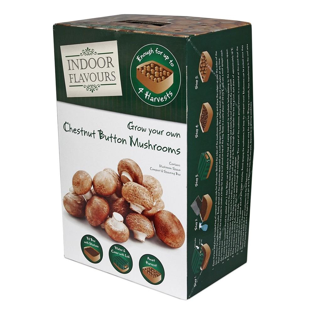 Grow Your Own Mushrooms Kit Uk