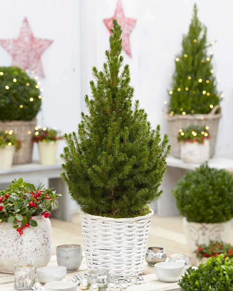 Large Christmas Tree: Contemporary Christmas Tree With Festive Basket