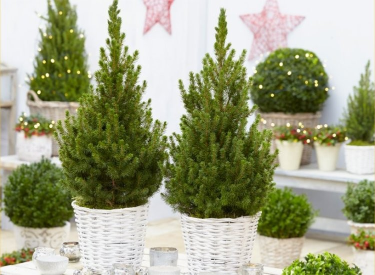 Pair Of Compact 50cm Contemporary Christmas Trees In