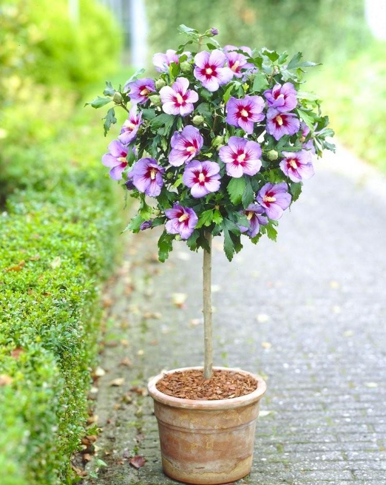 Amazing Gardening Express