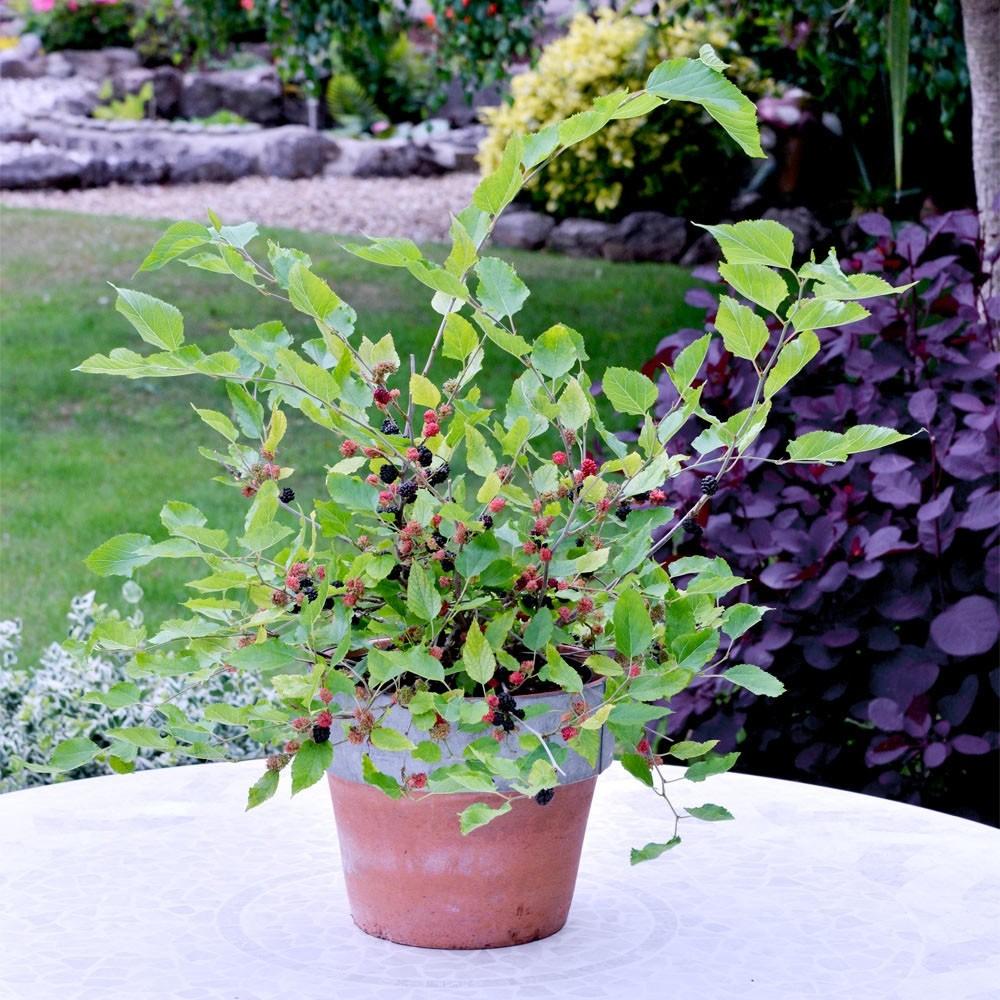 www.gardeningexpress.co.uk