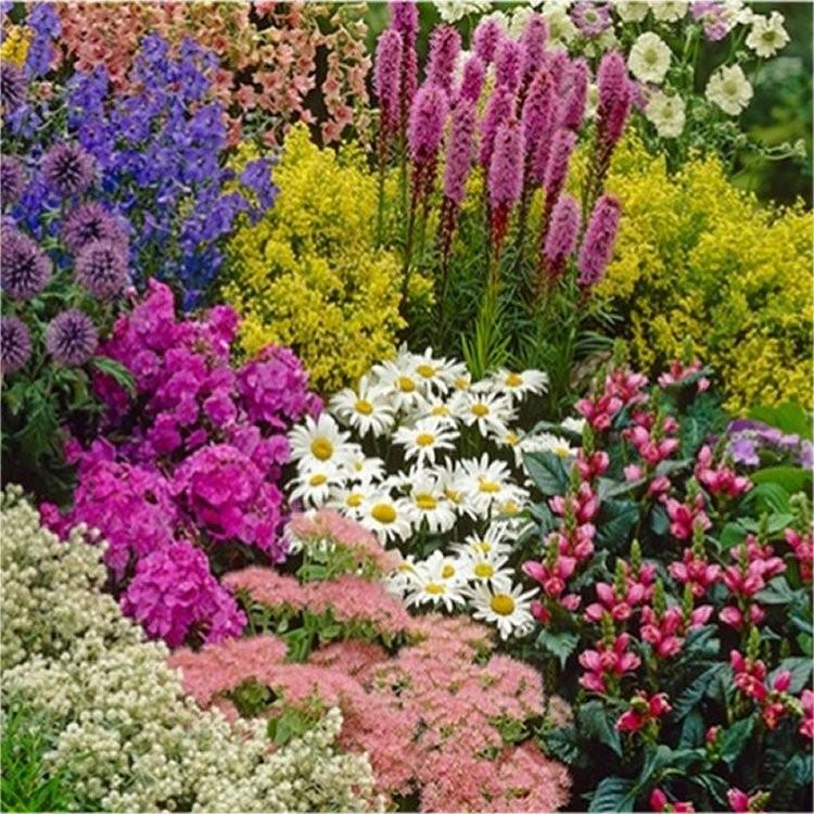 Flower Beds And Borders: TEN Established Cottage Garden Plants