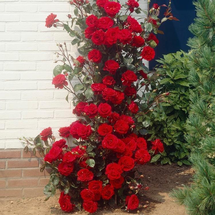 (๑ ᴖ๑)   Flowers, Pink roses, Winter garden