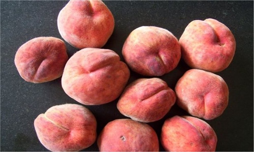 Amazing Red Leaved Fruiting Peach