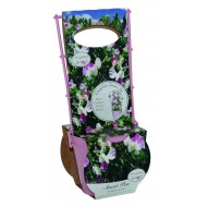 Sweet Pea Trellis Grow set - Villa Roma White & Rose