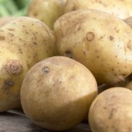 Rocket - 1st Early Seed Potatoes - Pack of 10