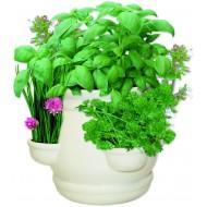 Grow your own Kitchen Garden Herbs Ceramic Planter Gift Set