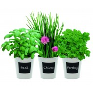 Trio Herb Gift Set