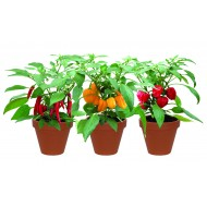 Terracotta Chilli Trio Grow Set