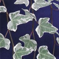Hedera helix Glacier - Variegated Common Ivy