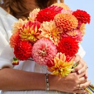 Grow your own Beautiful Dahlia Bouquet - Pack of FIVE