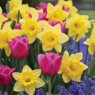 Designer Eye Candy Blend - Pack of 10 Bulbs