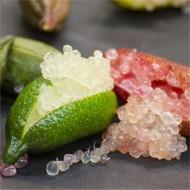 Finger Lime - Citrus Australasica sanguinea - Caviar Lime Tree