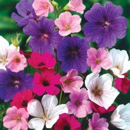 Hardy Geranium Breeders Mix Premium Collection - Pack of TEN