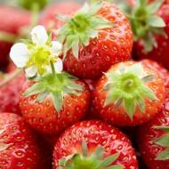 Strawberry - Honeoye - Pack of TEN