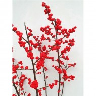 Ilex Verticillata - Winter Berry Holly