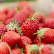 Strawberry - Kent - Pack of TEN