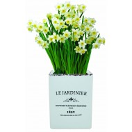 'Le Jardiniere' Dwarf Daffodil MINNOW Indoor Ceramic Grow Set