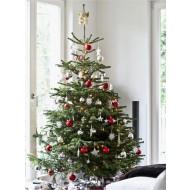 Fresh Cut Non-Drop Luxury Nordman Fir Christmas Tree (approx 7-8ft) + For Immediate Dispatch +