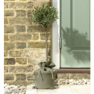 Standard Olive Tree in Rustic Jute wrapped pot