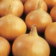 Onions Sturon - Yellow Onion - Pack of 50