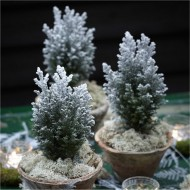 Mini Snow Covered Christmas Fir
