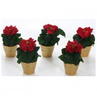 Winter Rose Poinsettia Plants in GOLD Ceramic Pots - Pack of FIVE