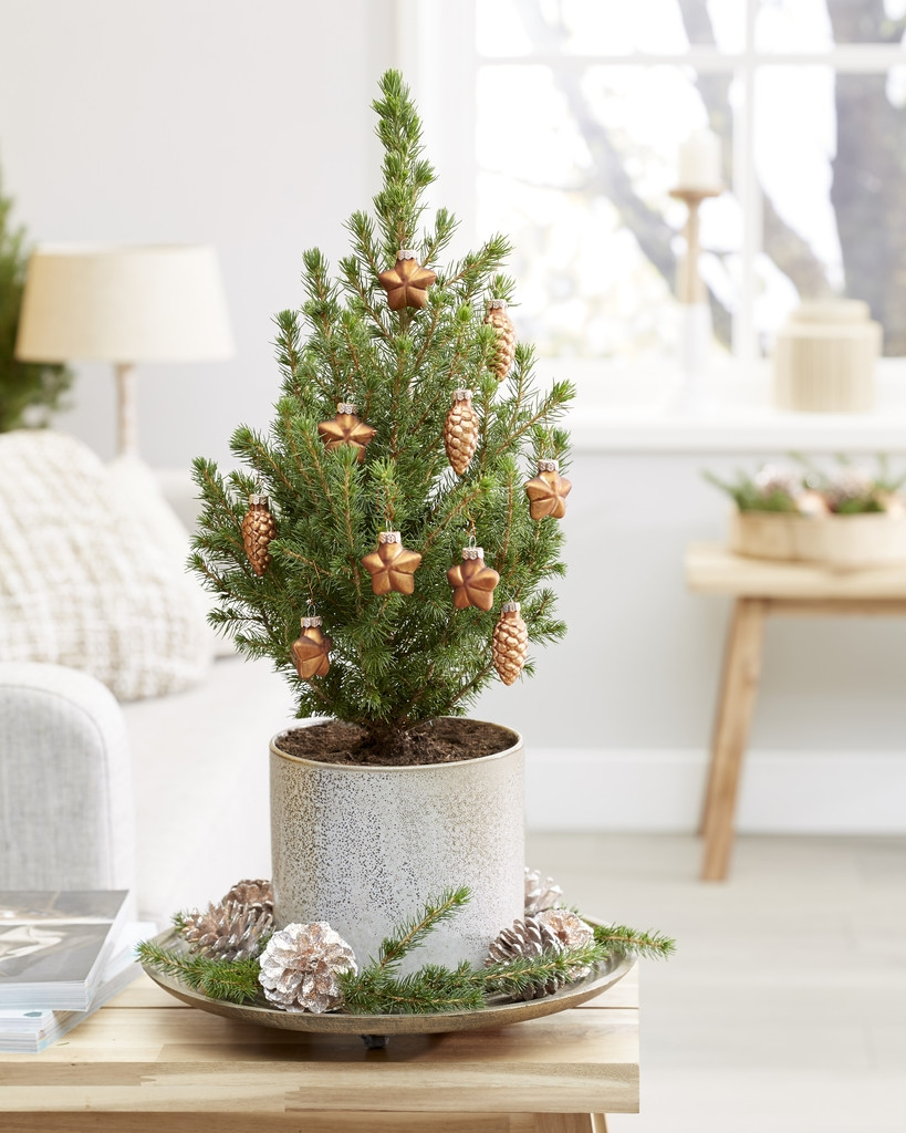 Mini Christmas Tree - Tabletop Christmas Tree - Classy ...